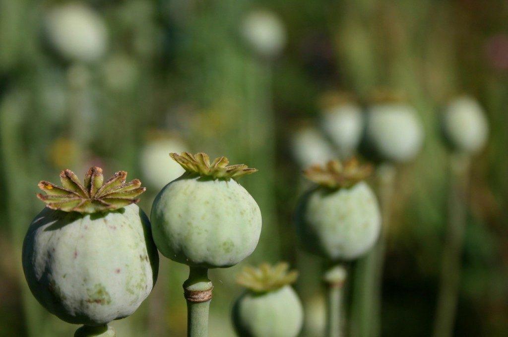 poppy-land-1327320-1280x850-1024x680